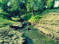 Охрана лесов на земле сельхозназначения